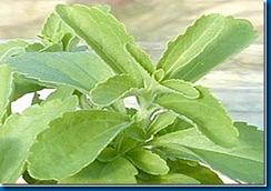 La Stevia: Planta medicinal