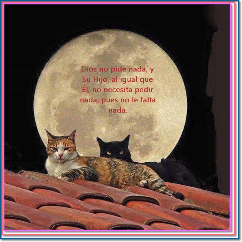 Gatos plenos en la noche