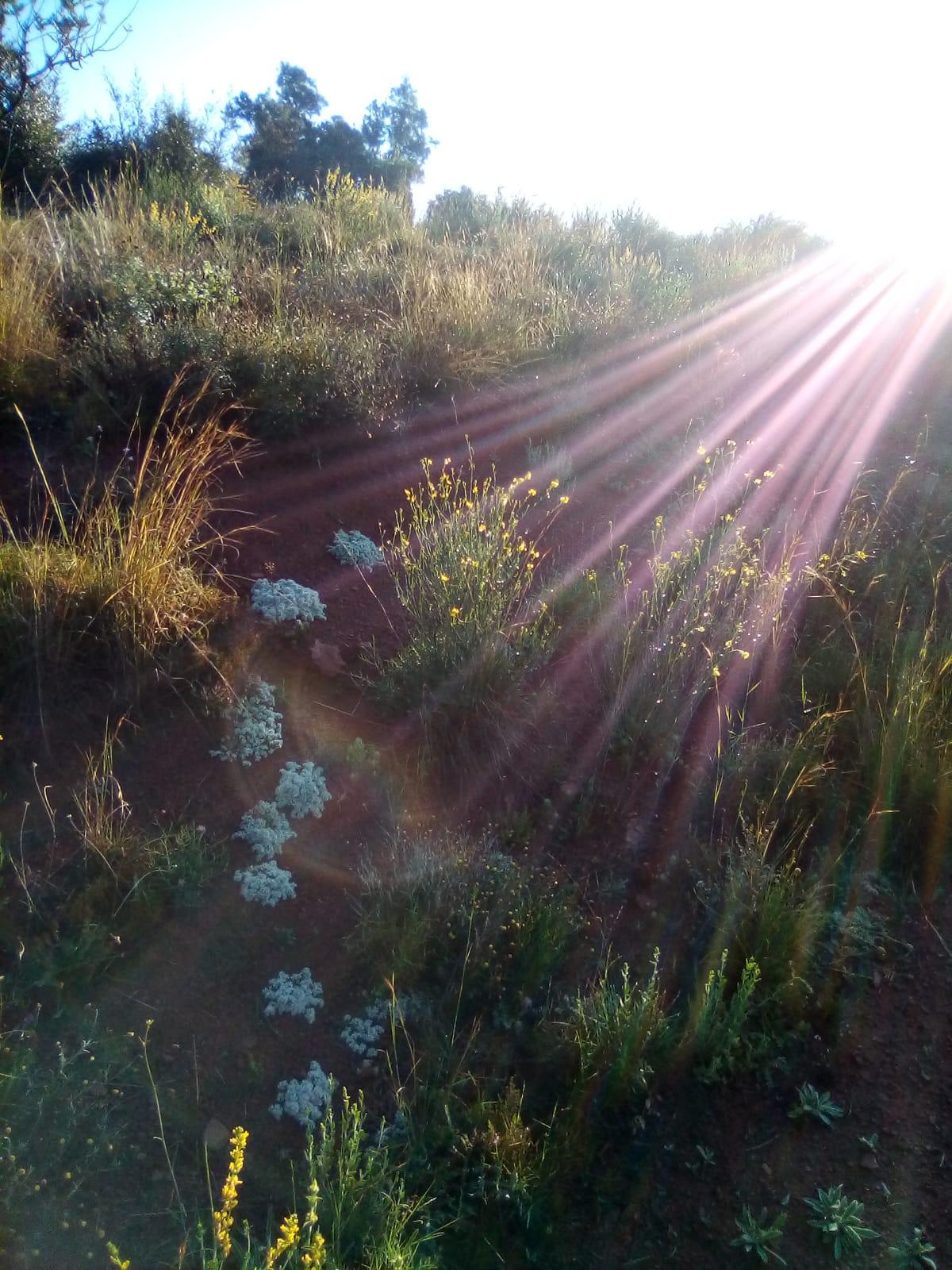 La luz baja focalizándose en la materia y dándole vida.